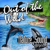 Out Of The Wild (Nature Sounds) Songs