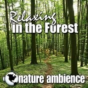 Relaxing In The Forest (Nature Sounds) Songs