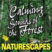 Calming Sounds Of The Forest (Nature Sounds) Songs