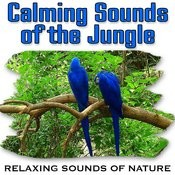 Calming Sounds Of The Jungle (Nature Sounds) Songs