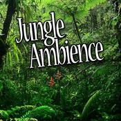 Jungle Ambience (Nature Sounds) Songs