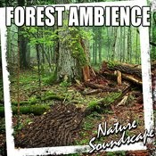 Forest Ambience (Nature Sounds) Songs