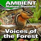 Voices Of The Forest (Nature Sounds) Songs
