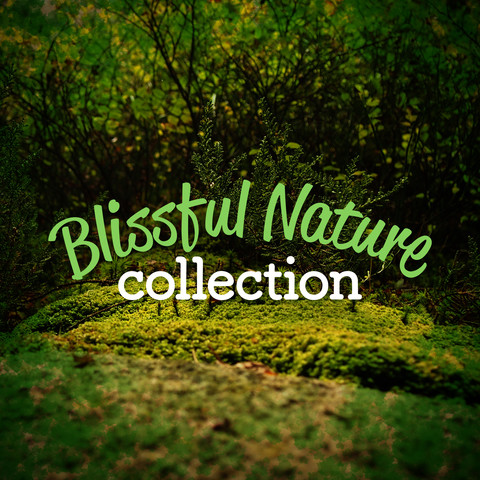 Good Morning Birds MP3 Song Download- Blissful Nature