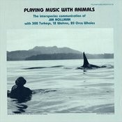 Orca Pod Vocalizing Song
