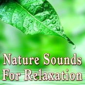 Nature Sounds For Relaxation Songs
