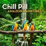 Chill Pill: Amazon Rainforest Songs