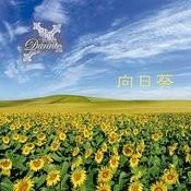 Himawari Songs