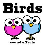 Birds Sound Effects Text Tones Songs