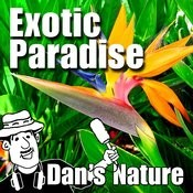 Exotic Paradise (Nature Sounds) Songs