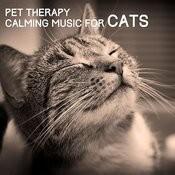 Feline Suite Song