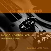 Johann Sebastian Bach: Hoffnung Und Schmerz - Geist Und Seele Sind Verwirret Bwv 35 Songs