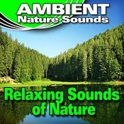 Relaxing Sounds Of Nature (Nature Sounds) Songs