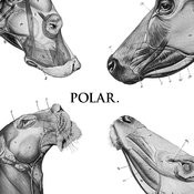 This Polar Noise - Ep Songs