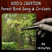 Forest Bird Song And Crickets (90 Minutes) Songs