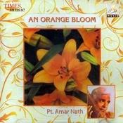 An Orange Bloom Songs