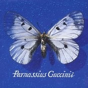 Parnassius Guccinii Songs