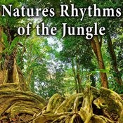 Natures Rhythms Of The Jungle Songs