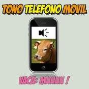 Vacas Mugiendo Tono Teléfono Móvil Efecto De Sonido Songs