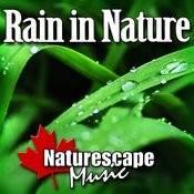 Rain In Nature (Nature Sound With Music) Songs