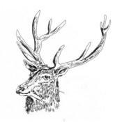 Black Deer Songs