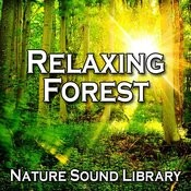 Relaxing Forest Birdsong For Serenity And Contemplation Song