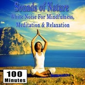 Sounds Of Nature White Noise For Mindfulness, Meditation And Relaxation Songs