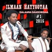 Ilmaan Hayyootaa Songs