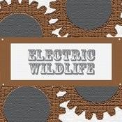 Electric Wildlife Songs