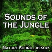 Sounds Of The Jungle (Nature Sounds For Deep Sleep, Relaxation, Meditation, Spa, Sound Therapy, Studying, Healing Massage, Yoga And Chakra Balancing) Songs