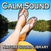 The Calm Sound Of Night Creatures For Rest And Healing Song