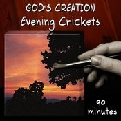 Evening Crickets (90 Minutes) Songs