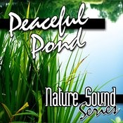 Peaceful Pond (Nature Sounds) Songs