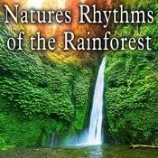 Natures Rhythms Of The Rainforest Songs