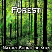 Early Morning Forest Stroll For Promoting Healing Wisdom And Inner Peace Song