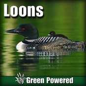 Loons (Nature Sound) Songs