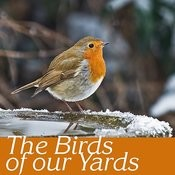 The Birds Of Our Yards Songs