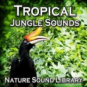Tropical Jungle Wildlife For Stress Release And Peace Of Mind Song