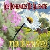 Rosa Blanca Song