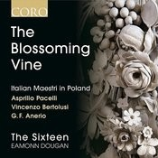 The Blossoming Vine: Italian Maestri In Poland Songs