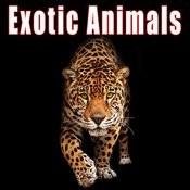 Animals: Exotic Songs