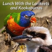 Lunch With The Lorikeets And Kookaburras Songs