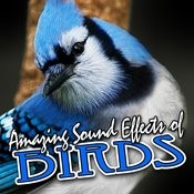 Amazing Sound Effects Of Birds Songs