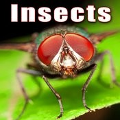 Insects Songs