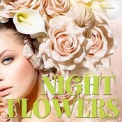 Night Flowers Songs