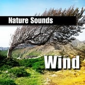 Wind Songs
