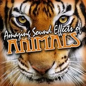 Amazing Sound Effects Of Animals Songs