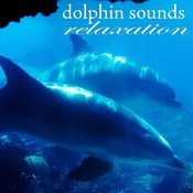 Dolphins Sounds Relaxation Songs