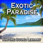 Wildlife In An Exotic Paradise For Meditation And Restful Sleep Song