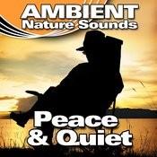 Peace & Quiet (Nature Sounds) Songs